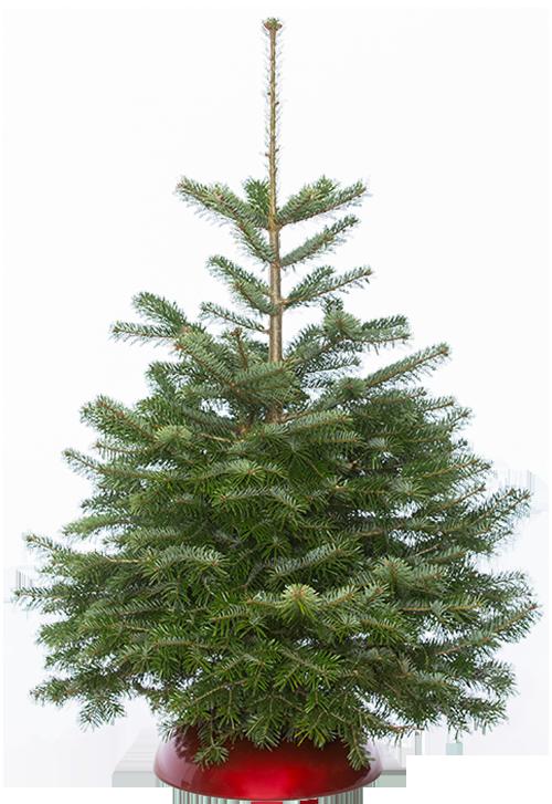 Echte Kerstboom Kopen De Kerstbomensite Nl